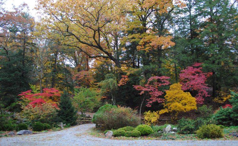 Photo of arboretum