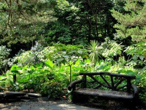 Isobel's bench