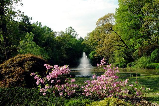 Fountain - spring