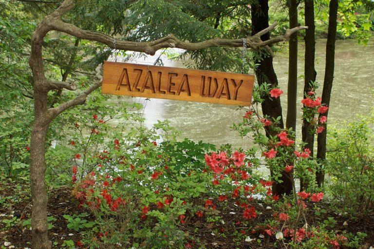 Azalea Way