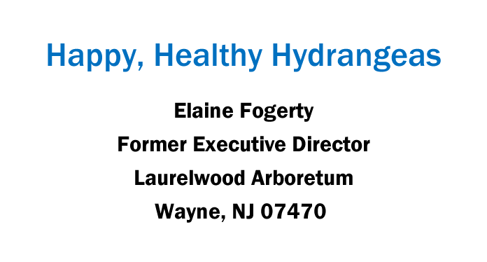 Happy-Healthy-Hydrangeas