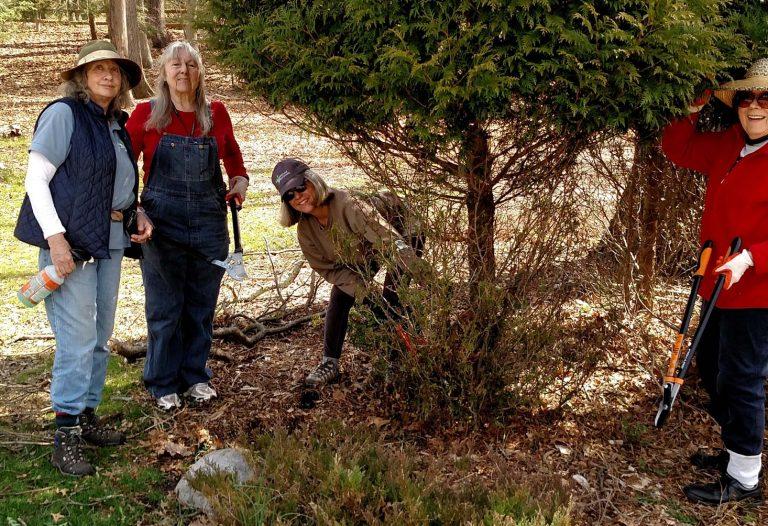 Pruning dead limbs damaged by deer
