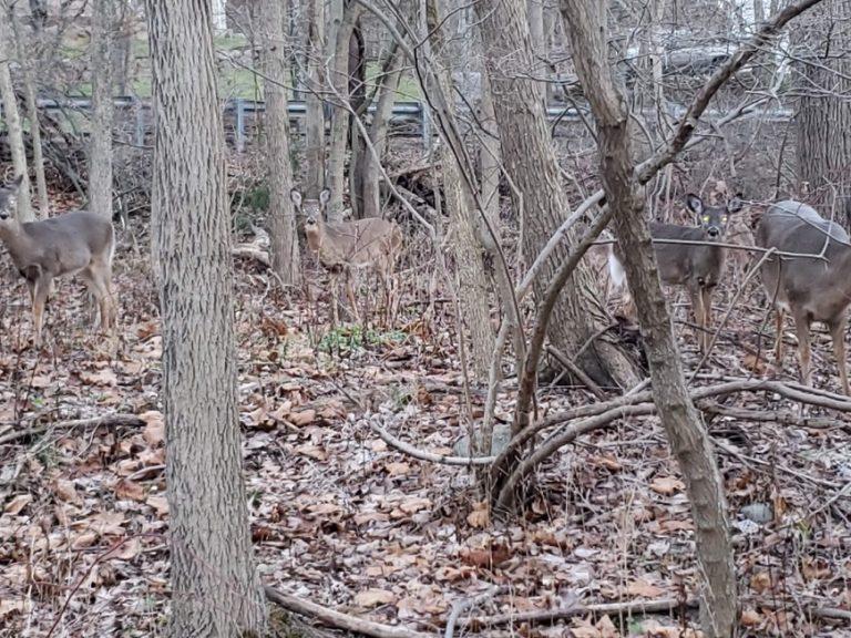 Deer Destruction